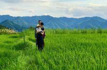 夕阳下的稻田