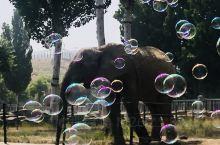 我在石家庄市动物园