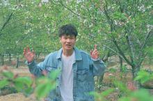 杭州最大免费樱花园,你错过了吗?