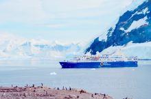 """南极的纳克港、一大片粉色的雪地上,成千上万的巴布亚企鹅。粉色的雪,是企鹅拉的粑粑。你会经常听到""""噗哧"""