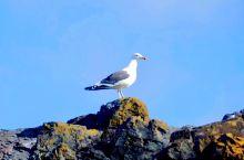 """南极的海鸟、燕鸥、三五成群的在岩石顶上、海鸟在眺望。企鹅悄悄的探了个头,""""什么情况""""。海豹面前的一块"""