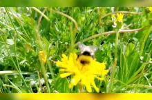 乌兰布统大草原最美时刻来临,欢迎来大草原畅游度假。
