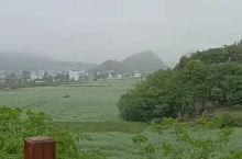罗平县百万亩油菜花基地 壮观