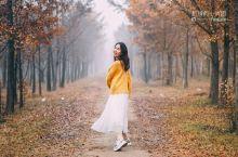 北京小众赏秋季,一片金色的银杏林
