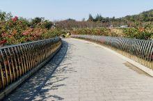 漫步樱花公园 中