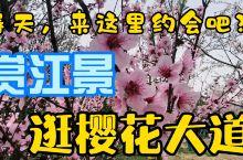 趁春天还未走,长江边,赏江景,逛樱花大道