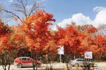 国庆旅游,带你邂逅最美的红叶谷