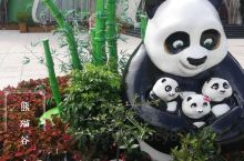 大熊猫之家-熊猫谷