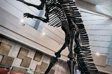我去了恐龙博物馆
