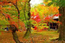 日本京都赏枫名所东福寺的秋色!