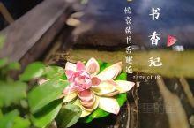 柳州邂逅/入住书香气质酒店的美好时光