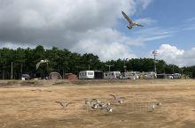 海边野营场