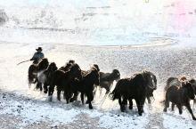《摄影门外看》乌兰布统大草原的冬天