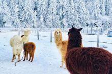这才是仙女山冬天该有的样子