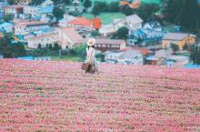 日本深度游距白川乡飞驒高山最近的童话花海