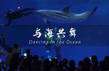 【曲江海洋馆】我可以在海洋世界遨游一整天