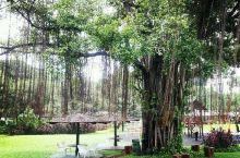 后花园的旧时光——雅加达婆罗浮屠酒店 旧时光是用来浪费的,浪费在这样午后夏季的微风里,浪费在这样细雨