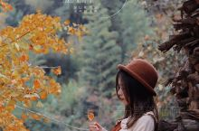 最美秋天拍照地——必打卡