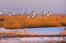若想近距离观赏到丹顶鹤的飞翔,玩耍喜闹,觅食,梳理羽毛,……您就来丹顶鹤的故乡:扎龙湿地