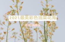 2021年最美彩色油菜花海|汉中西乡