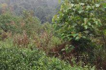 在龙州八角乡,走了20几分钟的泥泞山路,终于爬上茶园,看到音乐电影MV《龙州媚》的拍摄现场了,见到歌