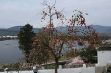 最美秋色---柿子树