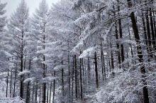 山林的春雪漫漫