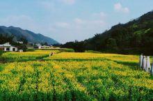草长莺飞,春意正浓,正是赏花好节!