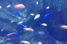 这是真的哦,海洋的鱼类真的多种多样,很绚烂夺目迷人