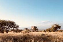 肯尼亚-走进动物世界