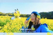 西施故里.好美诸暨:东白湖布谷湖的油菜花