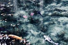 现实版莫奈池塘 日本北陆秘境