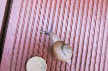 水边的蜗牛
