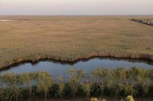 黄骅市南大港湿地公园。 先乘船慢悠悠观赏芦苇荡及水上的野鸭子。然后再登上最高的观鸟亭,看看一望无际的