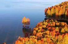 四明湖红杉林