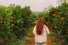 湖南超好吃的脐橙都藏在这里!爱了