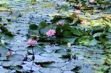 绿野仙踪,探索大自然的秘密