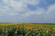 夏天的葵花地,蓝天白云,一望无际,在这样的环境里,能够脱离城市的喧嚣。