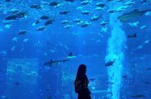 「三亚」亚特兰蒂斯水族馆也能拍超美大片啦