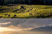 可可西里藏羚羊的故乡
