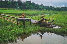 来中国最美乡村婺源度假