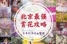 追花五年,最全北京赏花地总结来啦! 作为超爱拍花花的人,我在北京追花的时间已经有五年了,北京大大小小