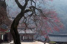 曹溪寺,山门如同中国牌坊,采用苏