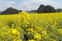 3月中旬,到罗平看油菜花田!曲靖市罗平县的油菜花田蔚为壮观!除了观赏油菜花,还能游多依河、九龙瀑。