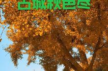 有城有色的西安之秋