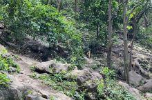 黔灵山公园猕猴的乐园
