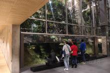 巴塞罗那宇宙盒之热带雨林