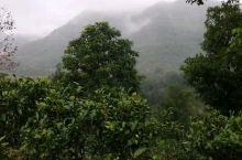 茶山云雾缭绕的,雨终于停了,音乐电影《龙州媚》MV继续在龙州八角乡的茶山拍摄。