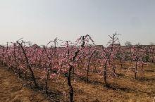 法门寺旁边的桃花园