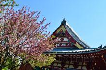 漫步京都看樱花尽情绽放
